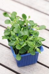 asian watercress