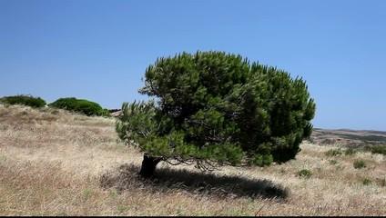 Tree in the Algarve, Portugal