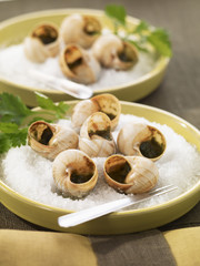 snails from bourgogne with parsley butter