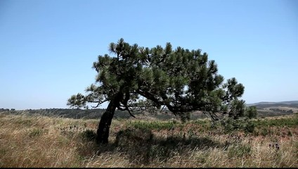 Tree in Algarve, Portugal