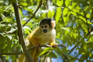 Alert monkey