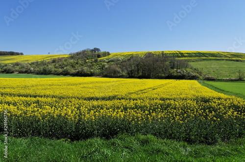 champs de colza cultivés dans la campagne française