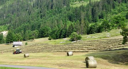 exploitation agricole dans les alpes bernoises