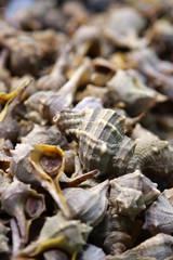 Cockle-shells