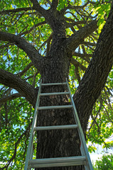 Ladder going up to Tree