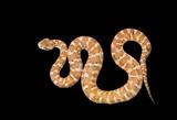 Venomous snake 3 poster