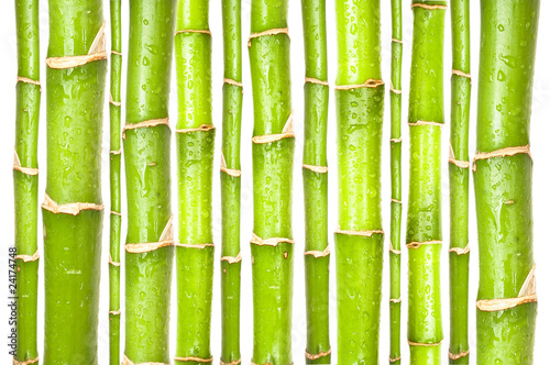Foto op Plexiglas Bamboe Bambus