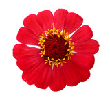 red flower for a decoration