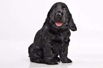 Babyhund 110710-2