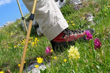 Bergwandern - Hiking in the Mountains