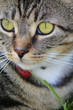 Kater Portrait - Good looking cat