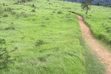 A path on grass field