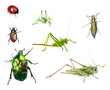 Insects collection isolated on white