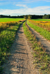 Dirt Road Through Field