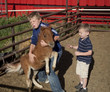 young boys working with baby horse