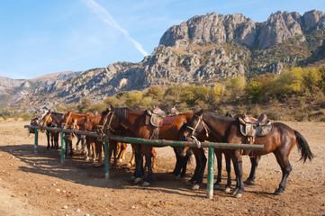 Horses at a hitching post