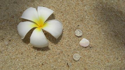 sable blanc et fleurs