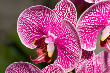 Close-up of cymbidium or orchid