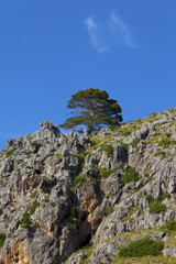 Single Tree At The Steep Coast of Majorca.