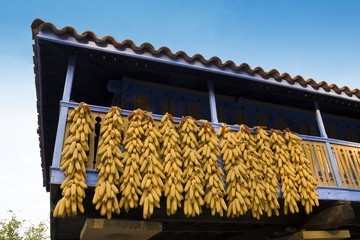 Corn cobs dry on balcony in Asturias, Spain