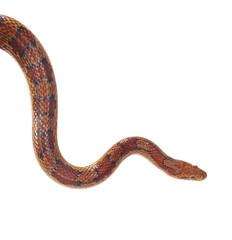 schlange snake 28