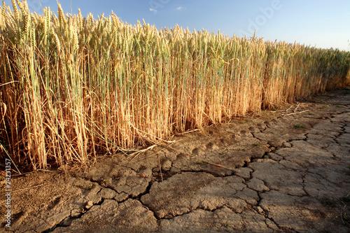 Leinwanddruck Bild Dürre
