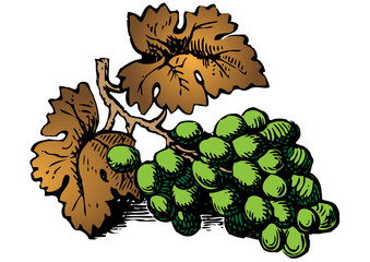 grabado racimo de uvas