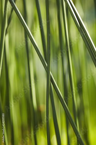 In de dag Bamboo Schilf 02