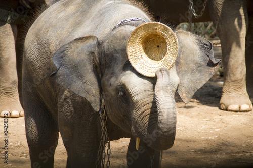 Elefant mit Strohhut