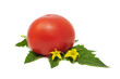 Red Tomato with Leaves and Flowers