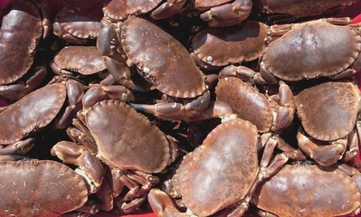 Pile Of Crabs, Burnmouth, Scotland