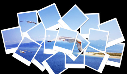 Photo collage with summer sky, ocean and flying seagulls