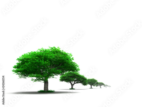 row of young green trees on a white background