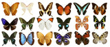 butterflies collection colorful isolated on white poster