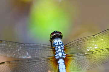 closeup dragonfly