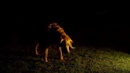 Dog Evening Casting