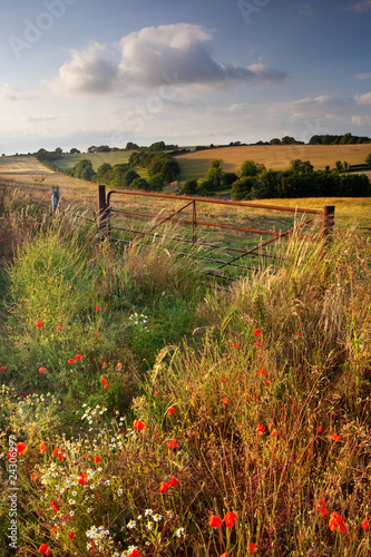 Summer evening, Cranborne Chase, Dorset, UK