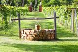 Fototapeta Water-well in grape field