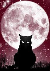 Mystery-Cat