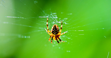 Spider hanging on web