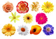 Various flowers. Isolated on white background