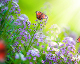 Butterflies on a flowers.