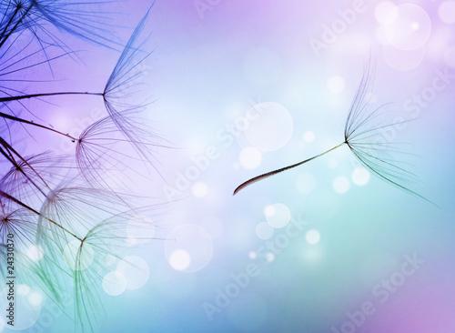 Zdjęcia na płótnie, fototapety na wymiar, obrazy na ścianę : Beautiful Abstract flying Dandelion seeds
