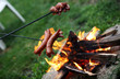 Roasting sausages on campfire in the garden