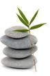 Still life –bamboo and stones
