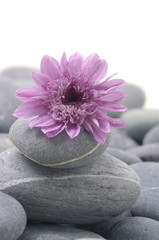 Zen pebbles with pink flower