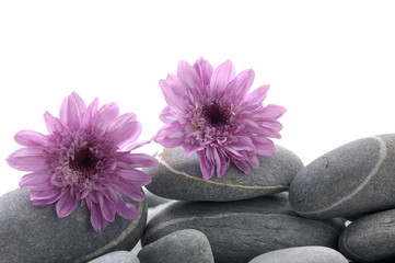still life pebbles and pink flower