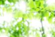 木漏れ日 - 24340376