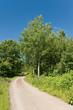 Sommer, Weg, Landschaft, Naherholungsgebiet