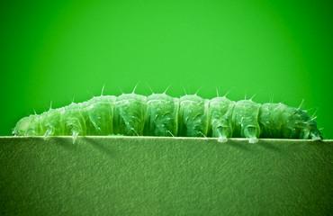 Green caterpillar on green background.